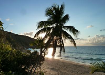T2_Tropical_Paradise@2x