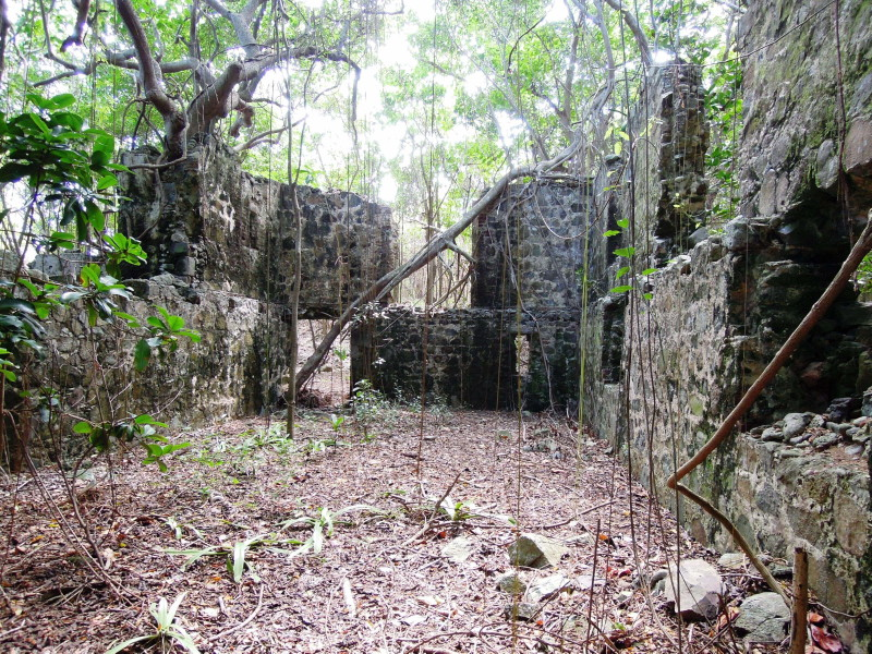 Cooten Bay, Tortola - interior of ruins with hanging vines