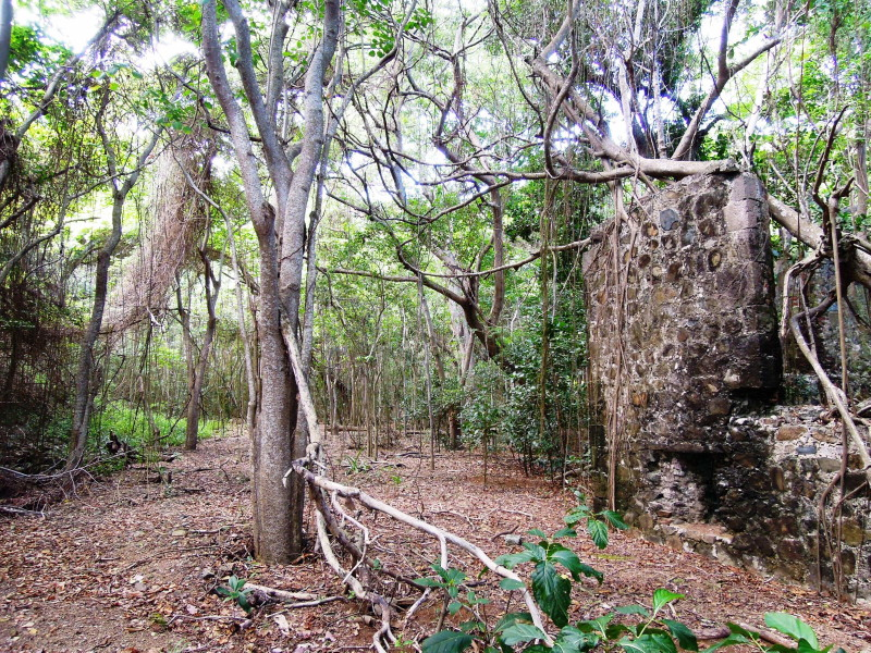 Cooten Bay, Tortola - remains of ruins likely used to make rum