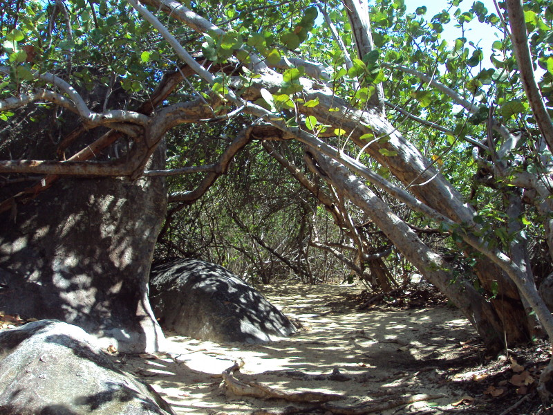 The Baths, Virgin Gorda - canopy cover on path to Devil's Bay